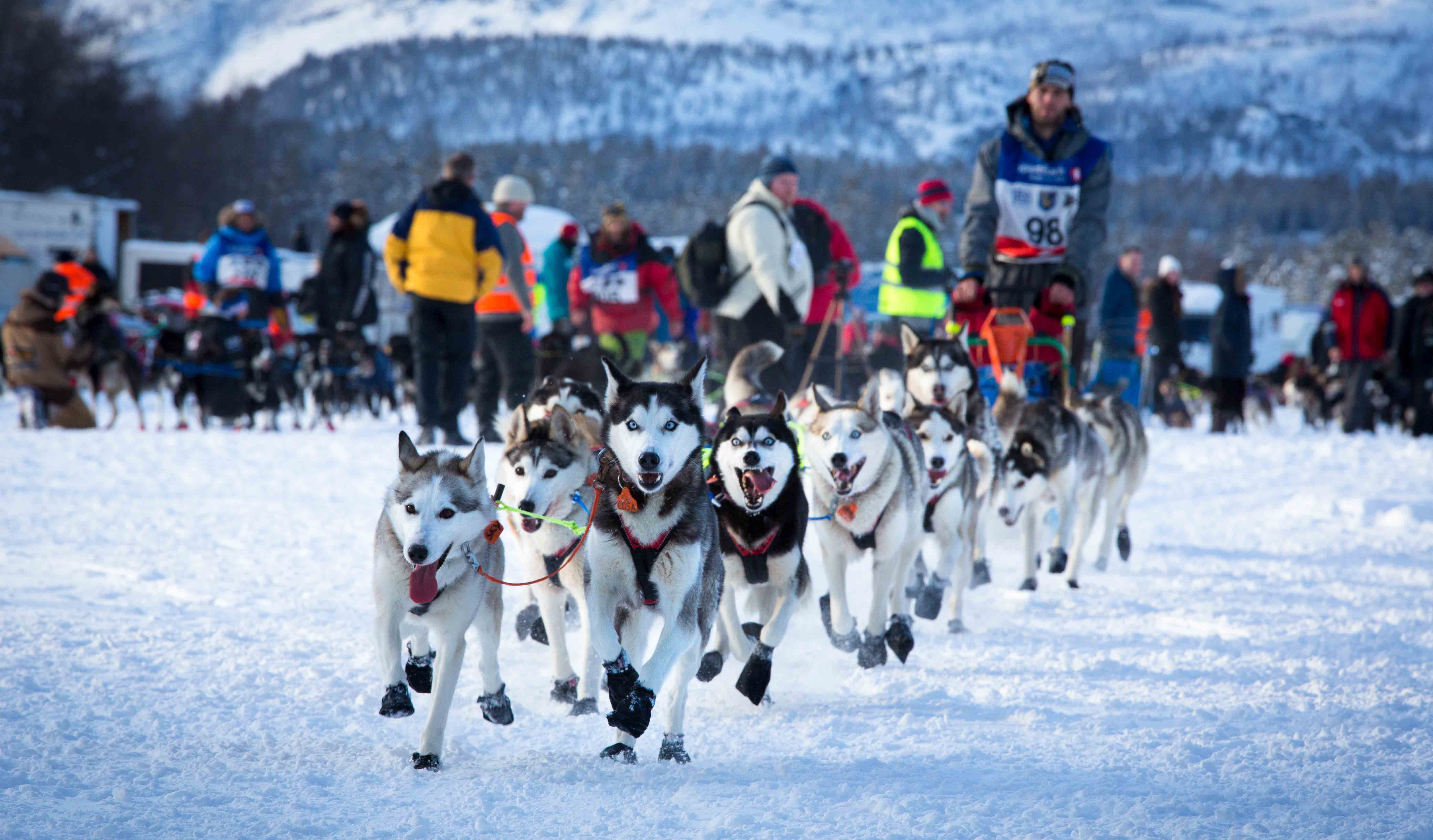 Mushing in Alta, Finnmark.