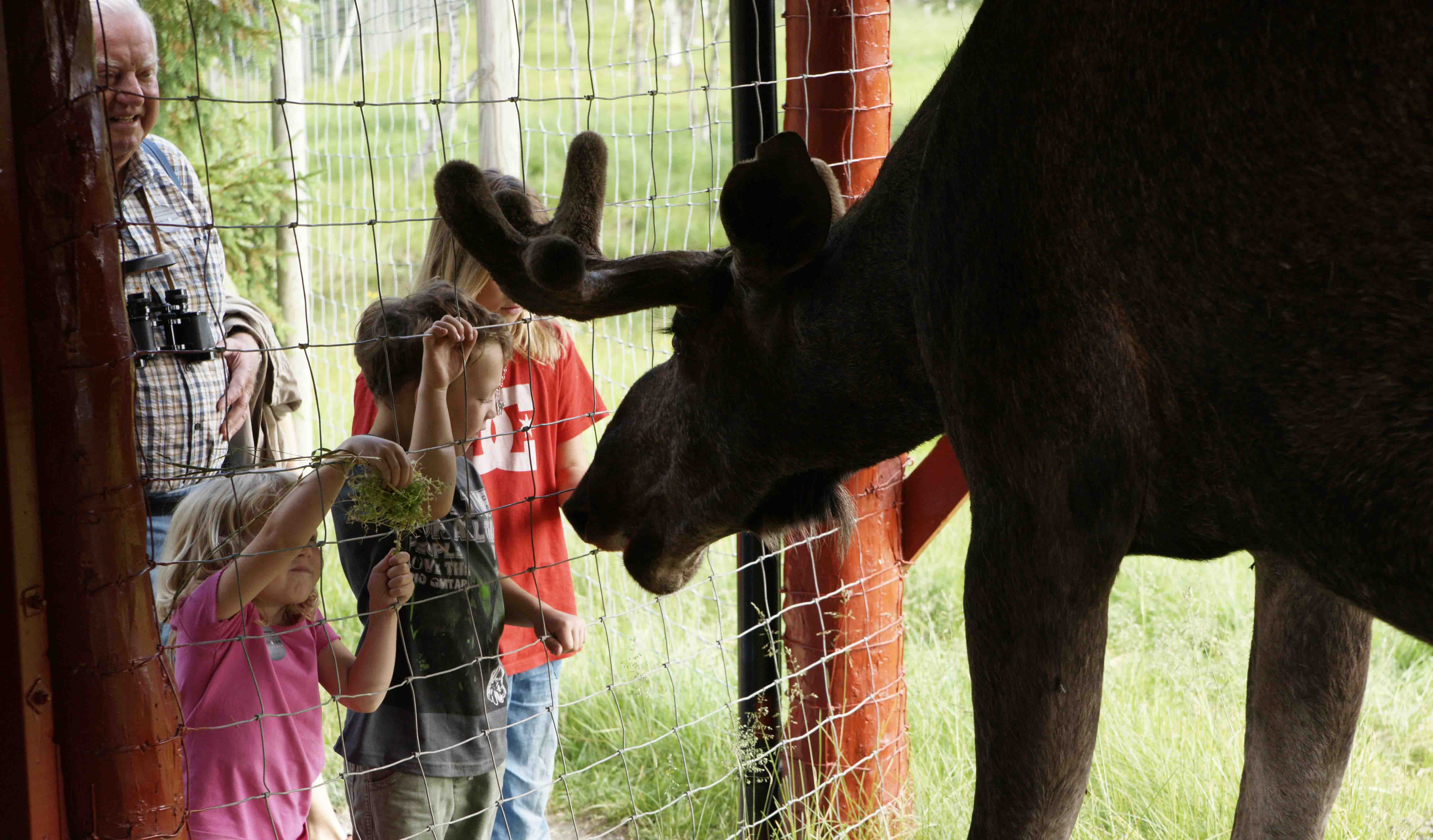 Moose greeting a few children in Namsskogan amusement park-