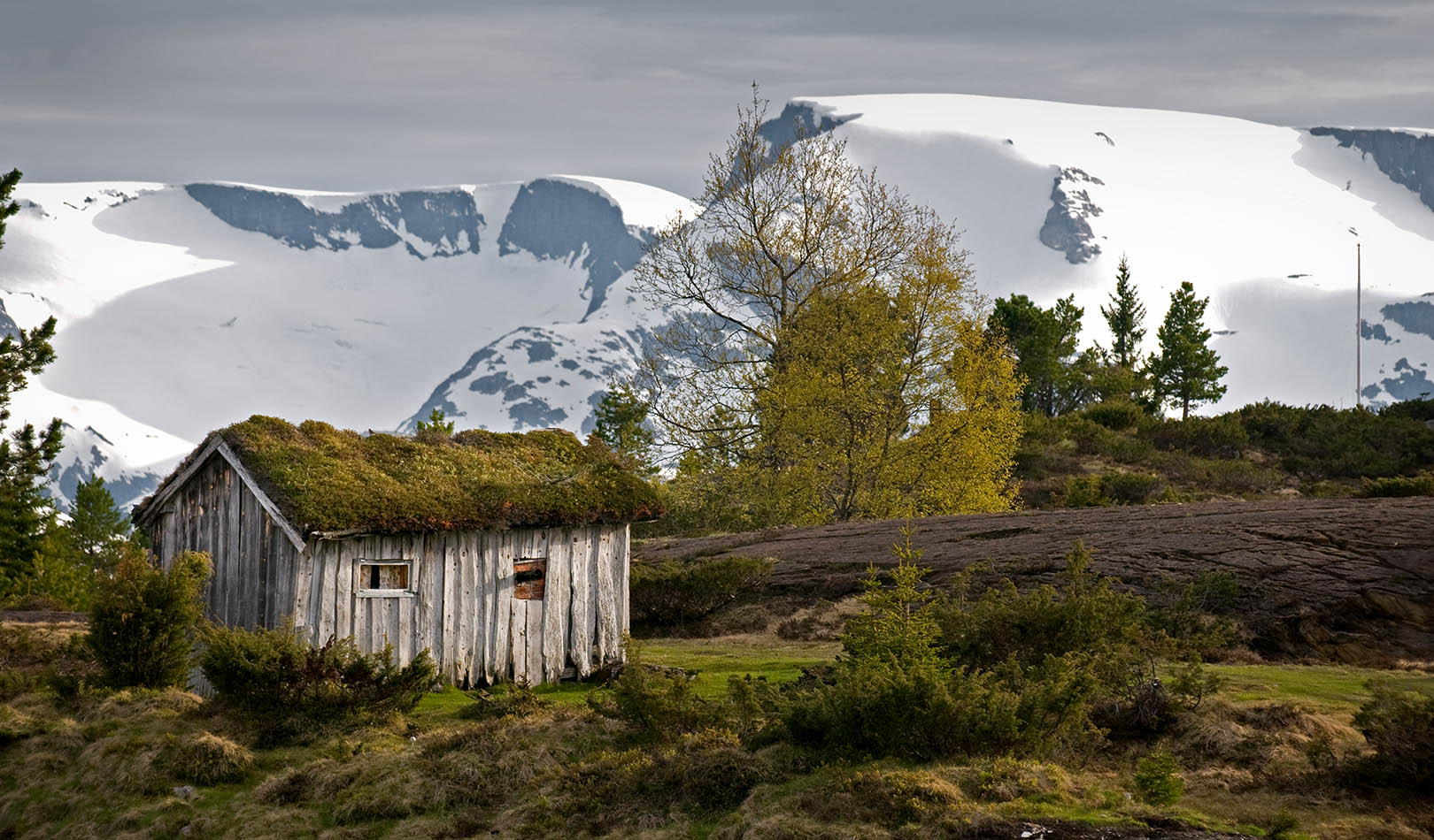 Old cabin on Utvikfjellet, Stryn, with white mountains in the background.
