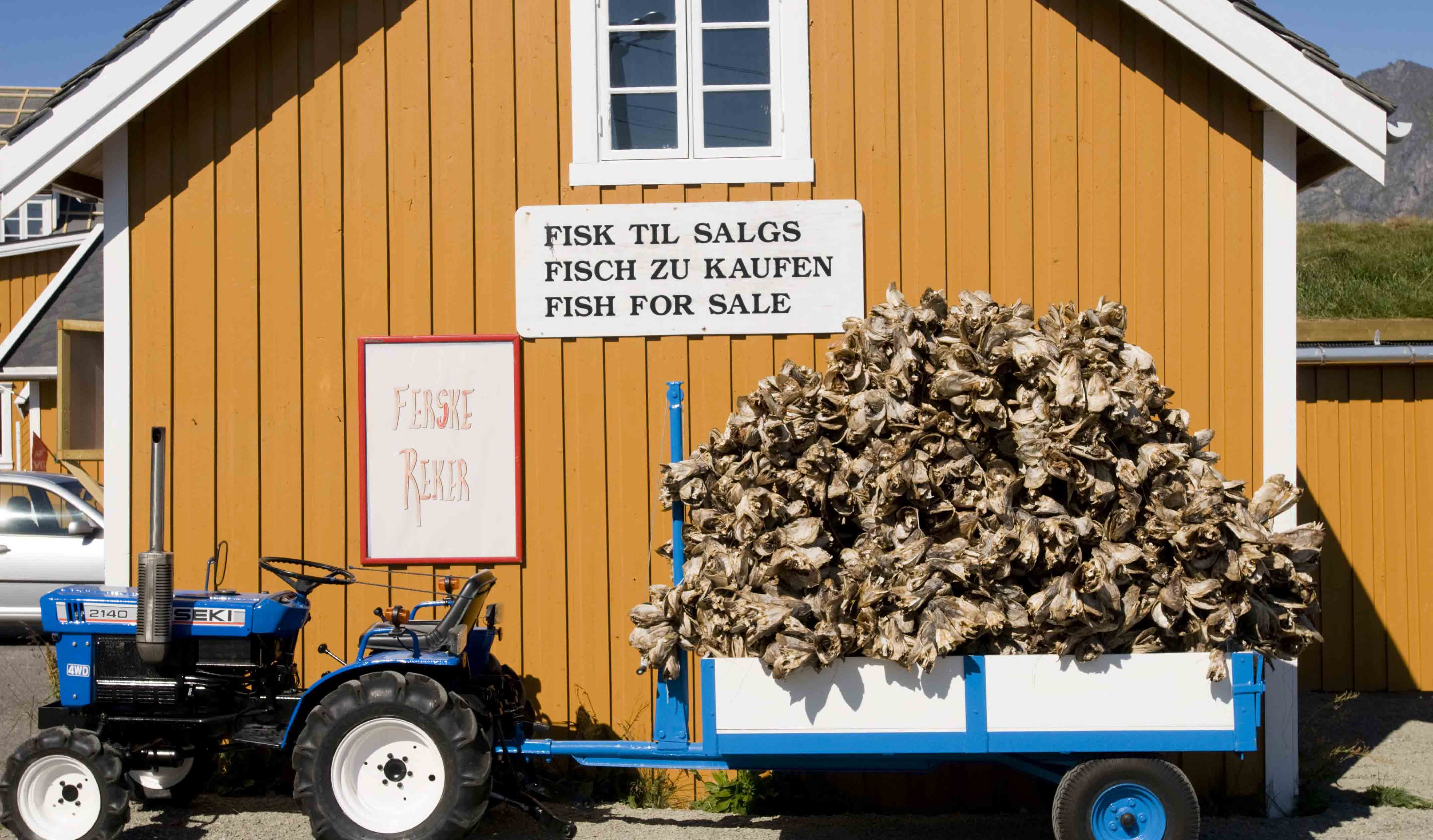 Stockfish for sale from a tractor fan, Lofoten.